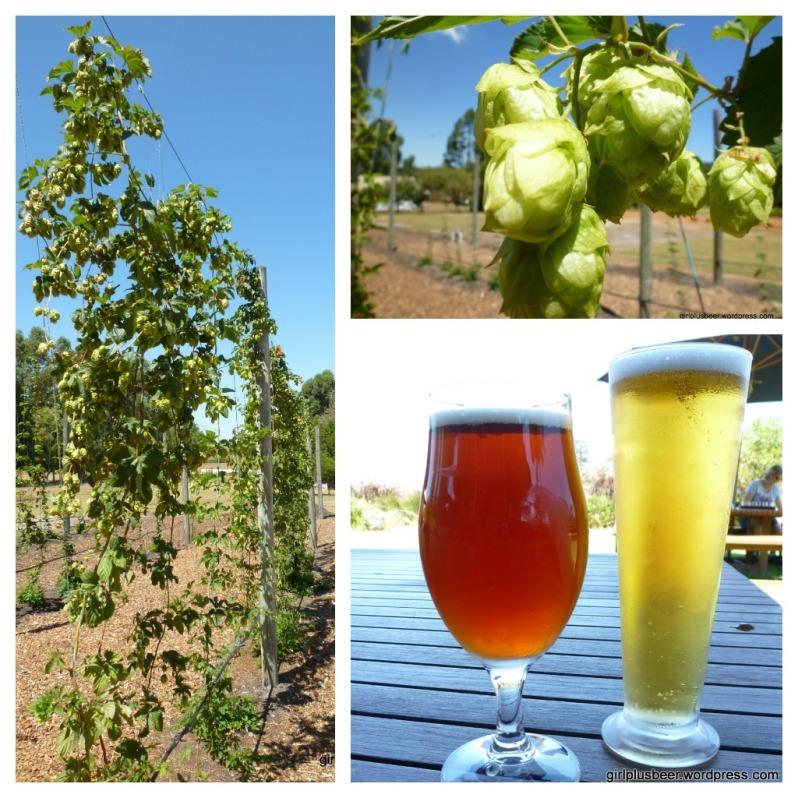 Beer and Hops at Cowaramup