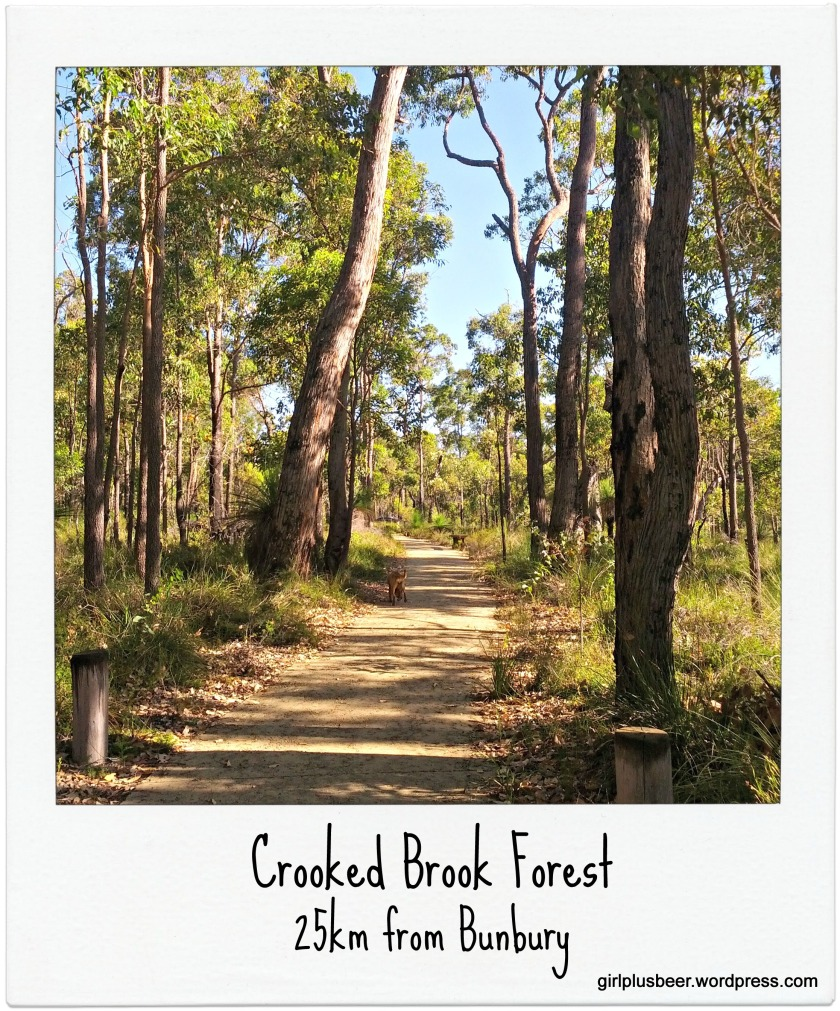 Crooked Brook Forest Polaroid Frame