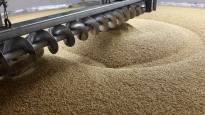 Photo from Gladfield Malt's Facebook page - Germination bed #4 full of Crystals, Toffee, Red Back and Shepherds Delight malts to be.